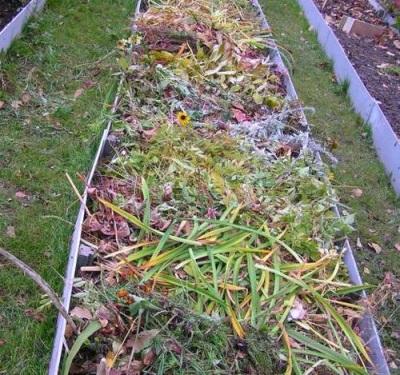 Выращивание волнушек - заготовка грядок
