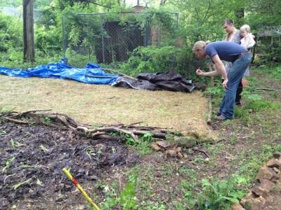 Выращивание шампиньонов на огороде и в саду
