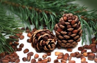 Кедровые орехи для оздоровления организма