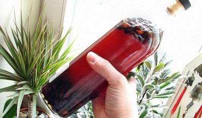 Настой с орехами кедровой сосны