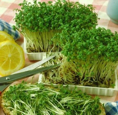 Кресс-салат посевной
