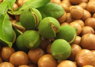 Орех макадамии богат микроэлементами полезными для организма