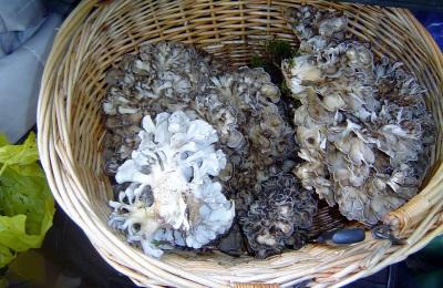 Интересные факты о грибах мейтаке