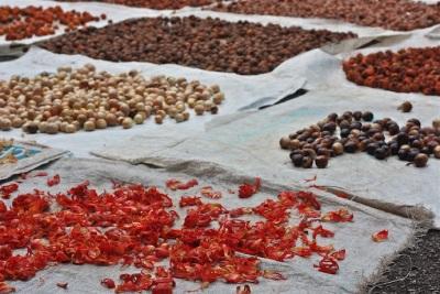 Производство мускатного ореха на ферме