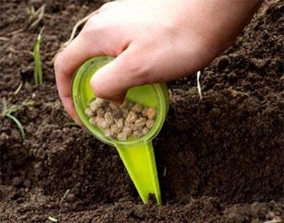 Посадка семян настурции в грунт