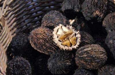 Как не ошибиться при выборе и покупке черного ореха