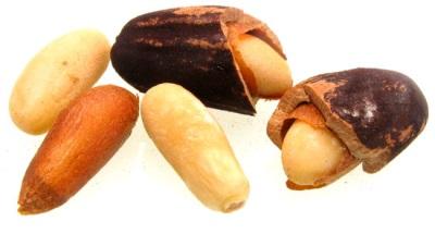Интересные факты о сосне и орешках пинии