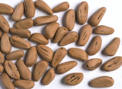 Семена пинии также используют в лечебных целях