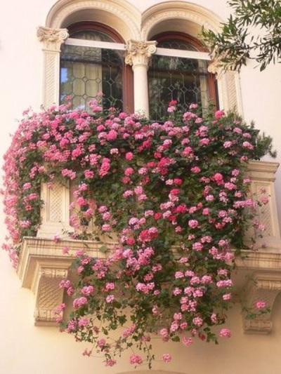 Портулак хорошо украшает балконы, сады, клумбы