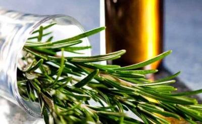 Получение эфирного масла розмарина