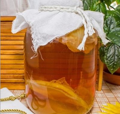 Чайный гриб родом из Тибета