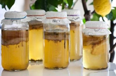 Как вырастить чайный гриб в домашних условиях?