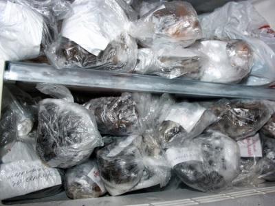 Замороженные грибы навозники