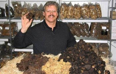 Рекомендации по выбору и покупке грибов трюфелей