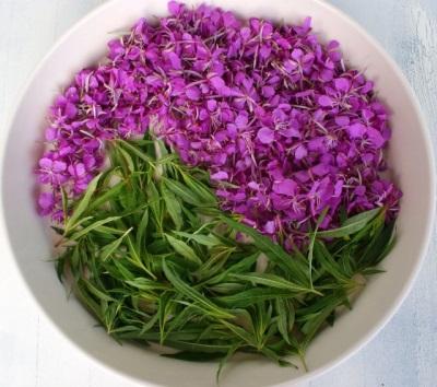 Пищевая ценность и калорийность иван-чая