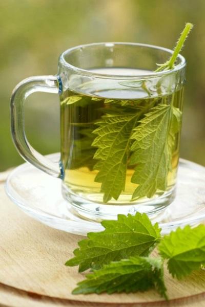 Чаи и отвары с крапивой