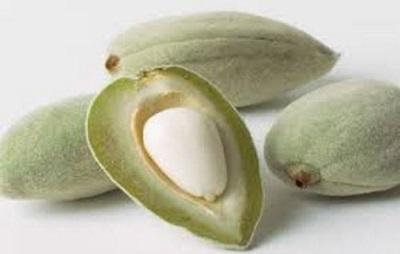 Зеленые орешки миндаля
