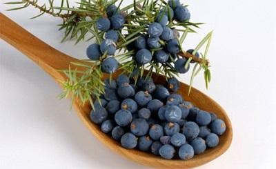 Характеристики плодов можжевельника