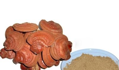 Грибы рейши имеют богатый химический состав