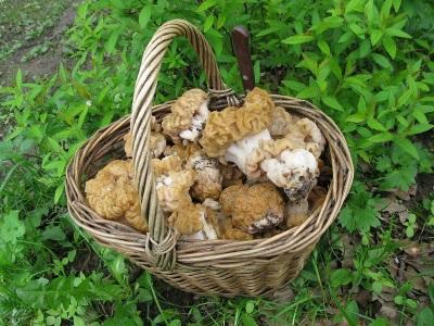 Интересные факты о грибах строчках