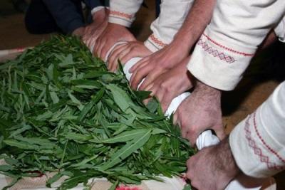 Скручивание листов иван-чая