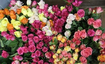 Химический состав роз