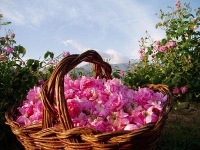 Розовые бутоны для варенья