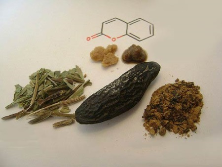 Бобы тонка (Диптерикс душистый): свойства, польза и вред, запах и применение