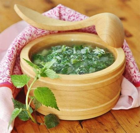 Крапива: полезные и лечебные свойства, противопоказания, применение, масло и сок