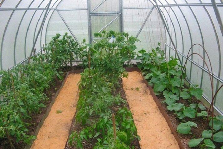Огурцы перцы и баклажаны в теплице: в парнике сажаем вместе, в одной выращивание и совместимость, можно ли сажать