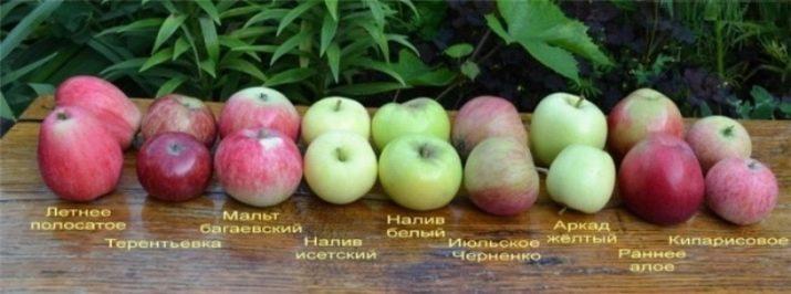 Яблоко на ужин. Можно ли есть яблоки на ужин и на ночь