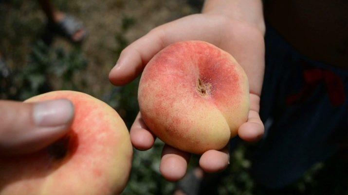 Инжирный персик - польза и вред