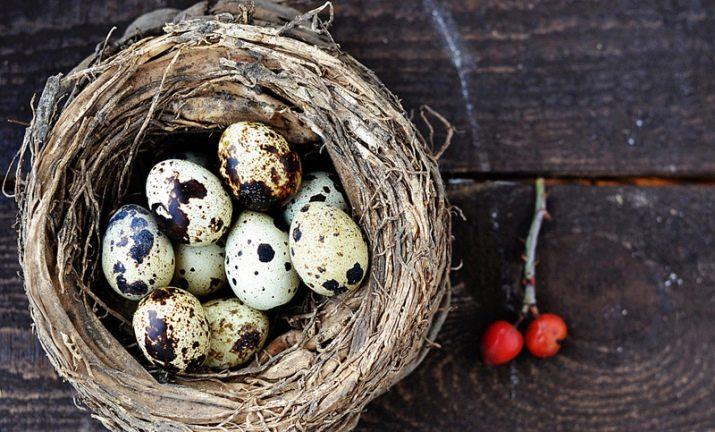 Вес перепелиного яйца